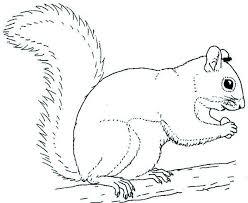 Grey Squirrel Coloring Page Art Squirrel Coloring Page Animal