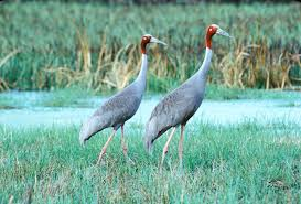 essay on wild life conservation wild life conservation essay ty 17 2016 the conservation society research teams agency documentary return to raise concern about