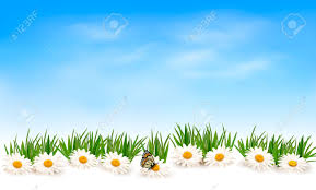 grass and flowers background. Perfect Flowers Nature Background With Green Grass And Flowers Blue Sky Vector Stock   31561925 For Grass And Flowers Background C