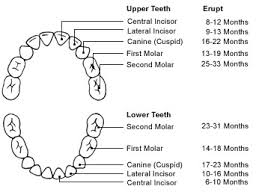What Age Do Kids Lose Teeth Chart 2min2x About Kids Teeth