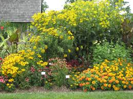 the photo on the left is from the ball seed company garden in west chicago illinois and shows more or less a wildflower meadow
