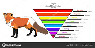 Images Animal Kingdom Classification Example Animal
