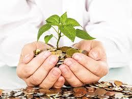 Бизнес план растениеводство Растениеводство Бизнес план проекта растениеводства