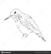 колибри тату черная колибри черная линия птица эскиз