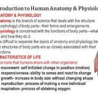 chapter thorax essay medicine and health articles p on pleural  intro to anatomy and physiology on what is human interest of