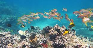 Hawaiian Reef Fish Chart Recommended Maui Snorkeling Spots By Experienced Snorkelers