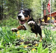 elegant design for landscape plants safe for dogs keep dogs out of flower gardens design for landscape plants safe for dogs landscape plants safe for