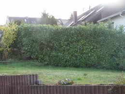 Sichtschutz Zum Nachbarn Was Ist Erlaubt Haus Garten Forum Holz Sichtschutz An Der Grundstucksgrenze