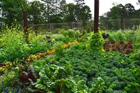 Small Picture Design a Beautiful Edible Garden Inspiration