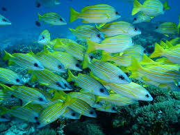 Image result for underwater world images in real