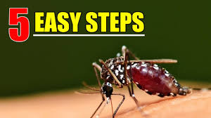 HOW TO Get Rid Of Mosquitoes With 5 EASY STEPS