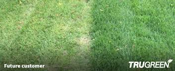 untreated lawn compared to a trugreen lawn in denver