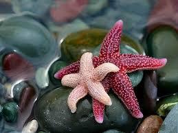 <b>Морская звезда</b>