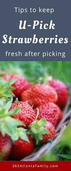 this post has some fantastic tips on how to keep strawberries fresh after picking as