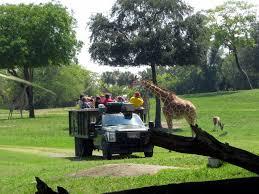 animal encounters at busch gardens tampa bay
