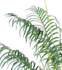 65 best jungle images on pinterest jungles, plants and tropical House Plants For Sale House Plants For Sale #25 house plants for sale online