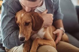Emotional support animal real Registry Svetikdgetty Images Vox Emotional Support Animals Theres Surprisingly Weak Scientific