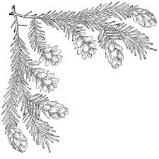 Pine Branches For Decoration Keyword Evergreen Decoration Clipart Etc
