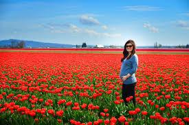 in tulip heaven