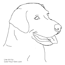 Small Picture Dog Labrador Retriever Headstudy Coloring Page