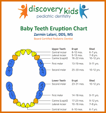 11 12 Baby Tooth Eruption Chart Lasweetvida Com