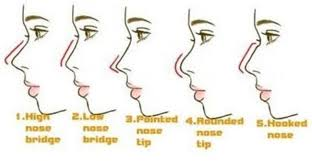 Nose Types Google Search Nose Types Nose Shapes