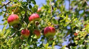 Seasonal Produce In Scotland Scottish Curriculum For