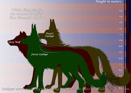 grey wolf size size chart caelupes n wolf by flareandicicle on deviantart