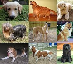Dog Breed Chart With Names Dog Wikipedia