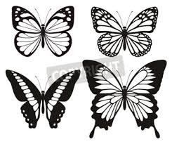 アサギマダラ蝶の写真イラスト素材 写真素材ストックフォトの定額制