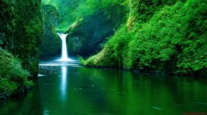 nature backgrounds tumblr. Tumblr Static Nature Waterfall Green Forest Background 图片Nature Backgrounds