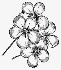 hand painted flowers hand painted black white png image and clipart