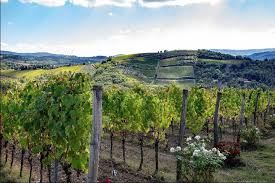 road tuscany wine tours from florence