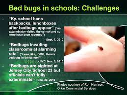 bed bug bully reviews. Bed Bug Bully Reviews Bugs In Schools Spray Product Review . O