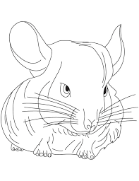 Small Picture Small chinchilla coloring pages Download Free Small chinchilla