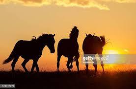 wild horses sunset. Wonderful Horses Wild Horses And Sunset R
