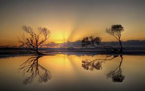 lit laptop wallpapers. sunset sky tree landscape reflection lit laptop wallpapers