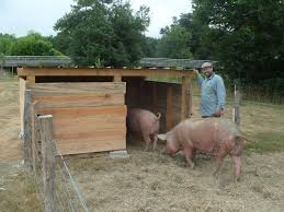 Pig Enclosure Design Pig Hut Time To Make The Bed With Max Helping Again In