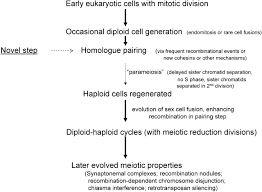 the evolution of meiosis from mitosis genetics  figure