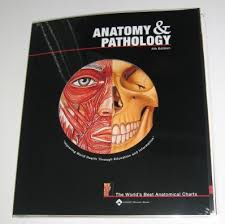Reflexology Books And Charts For Sale International
