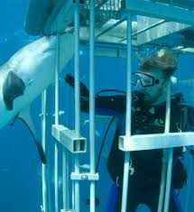 the shark wrangler s equipment prepare for the wild  by a brush or slap from a shark they fail in their job if they release their grip or fail to do their job someone else could be seriously injured