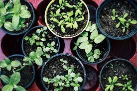 want to start an indoor herb garden