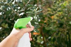 garden insecticide. Nice Natural Pesticides For Vegetable Garden 17 Best Ideas About With Homemade Insecticide