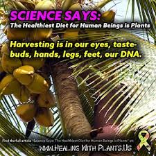 Image result for sciencesays plant diets are future