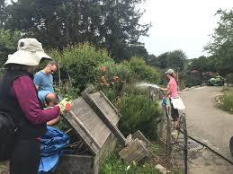 volunteers help clean up vandalized gardens