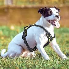 Buy Rabbitgoo Front Range Dog Harness No Pull Pet Harness