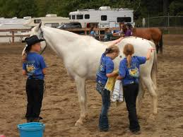 4 H Horse Projects Clallam County Washington State University