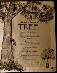 Tree Quotes Extraordinary Gallery Quotes About Trees And Life Best Romantic Quotes