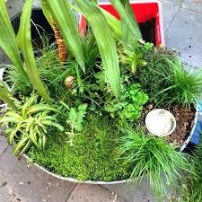 indoor cat garden cat garden best ideas on grass plants and indoor statues cat garden indoor indoor cat garden