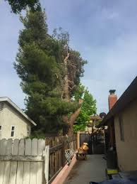 May I Legally Prune My Neighbor\u0027s Encroaching Branches And Roots ...